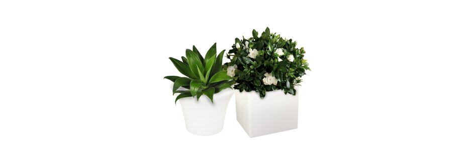 Die Pflanzen und Blumentöpfe von FURSTAR sind...